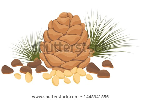 Cedar pine cone with nuts isolated on white background. Vector cartoon close-up illustration. Stock photo © Lady-Luck