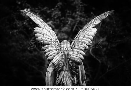 Back of an angel statue Stock photo © aladin66