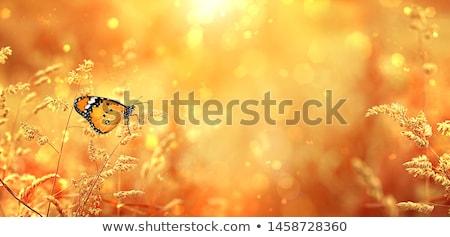 オレンジ 蝶 種 梅 ツリー 葉 ストックフォト © smithore