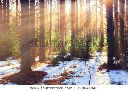 Olvad hó korai tavasz késő tél Stock fotó © Stocksnapper