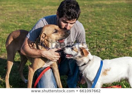 Сток-фото: два · смешанный · собаки · изолированный · белый