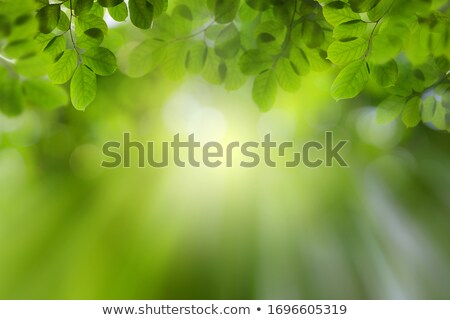 leaves in foreground with blurry background Stock photo © gewoldi