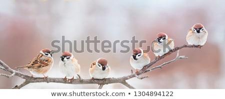 дерево · птиц · вектора · природы · иллюстрация - Сток-фото © ekapanova