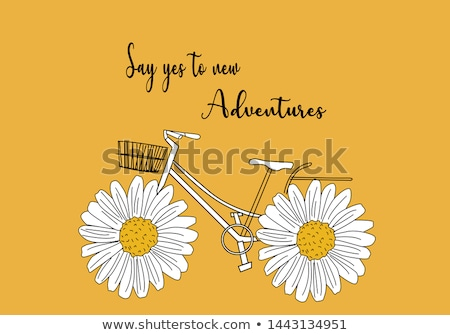 Geel · daisy · bloem · geïsoleerd · shot · bloemen - stockfoto © stocker