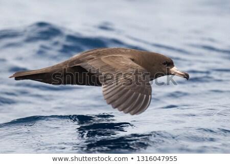 vlucht · water · zee · vogel · rock · vliegen - stockfoto © wolterk
