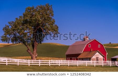 Vert jaune blé herbe clôture bleu Photo stock © billperry
