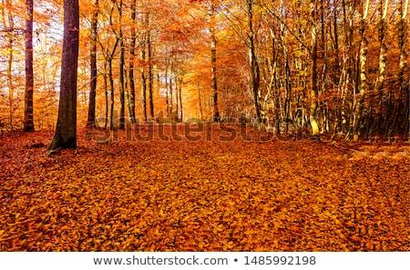 jesienią · lasu · drogowego · czerwony · pozostawia · słońce - zdjęcia stock © nneirda