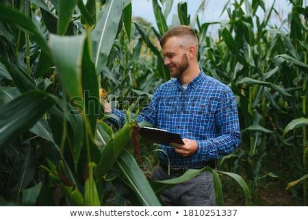 Aratás gazda kukoricamező eps akta alkotóelem Stock fotó © Voysla