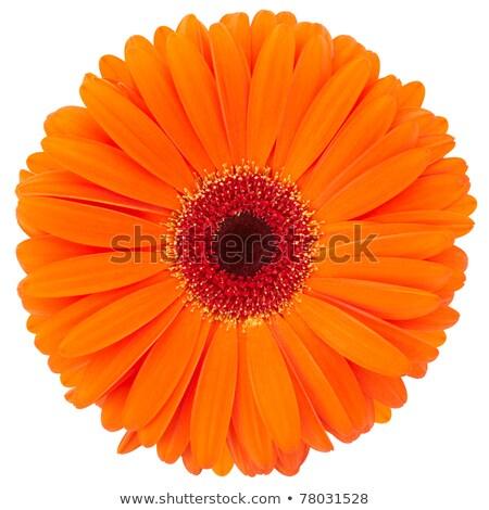 Stockfoto: Een · oranje · bloem · geïsoleerd · witte