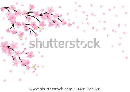 Sakura giovani bruna signora fiori albero Foto d'archivio © mtoome