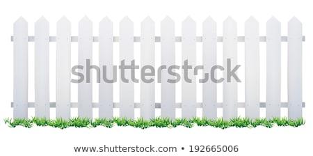 cerca · branco · campo · fundo · casamento - foto stock © kimmit