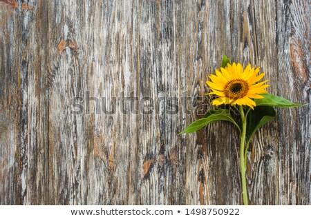 подсолнухи · пейзаж · горизонтальный · выстрел · красивой · подсолнечника - Сток-фото © ivonnewierink