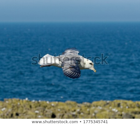 Norte voador água natureza mar Foto stock © Arrxxx