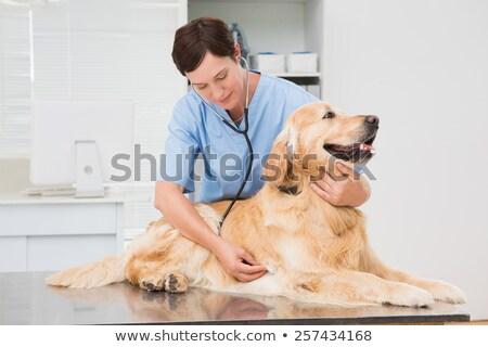Lekarz weterynarii cute psa stetoskop medycznych Zdjęcia stock © wavebreak_media