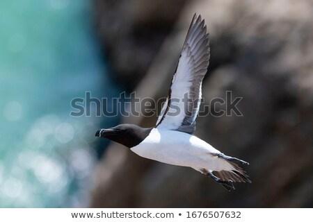 Criação colônia inglaterra mar fundo Foto stock © chris2766