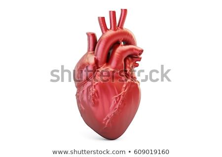 isolated heart on white background 3d image stock photo © iserg
