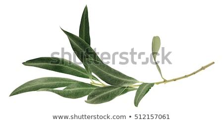 olijven · bladeren · witte · voedsel · blad · vruchten - stockfoto © Komar