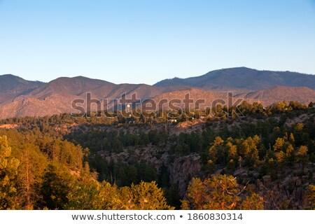 Nascer do sol Novo México pinho floresta EUA frio Foto stock © Qingwa