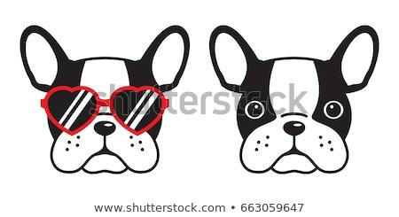 Hund Französisch Bulldogge Gläser weiß isoliert Stock foto © OleksandrO