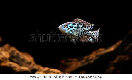水族館 · 魚 · ガラス · 図面 - ストックフォト © studiostoks