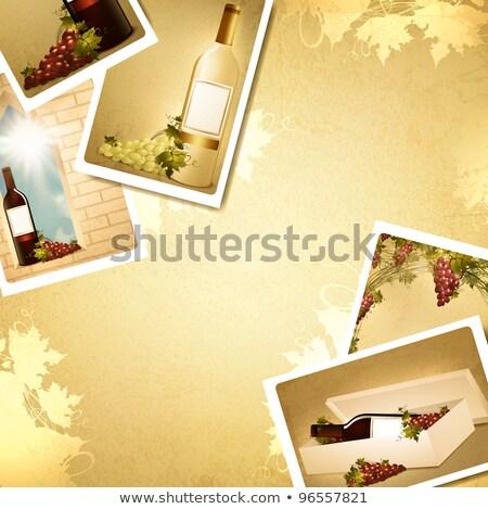Fényképkeret szőlőskert azonnali papír tájkép mező Stock fotó © hamik