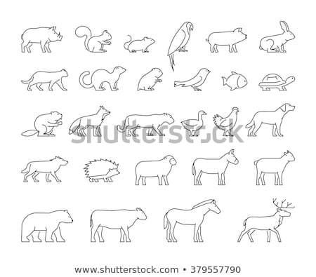 Animal vaca ilustração natureza fundo Foto stock © colematt