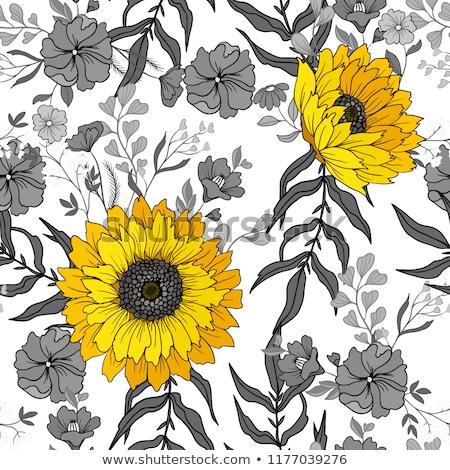 Foto d'archivio: Vettore · girasole · modello · di · fiore · sementi · testa · fiore