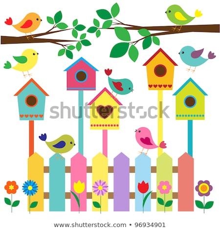 Színes szett minta színes madarak eps Stock fotó © netkov1