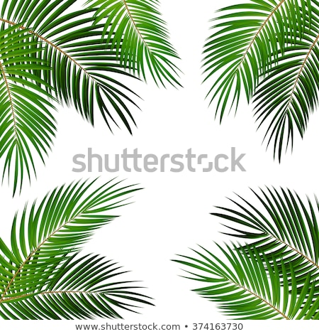kókuszdió · pálmalevél · szett · kézzel · rajzolt · fehér · tengerpart - stock fotó © artspace