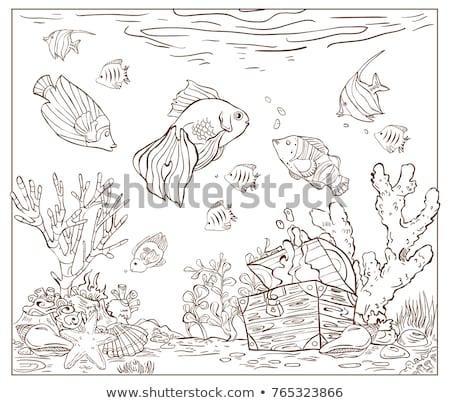 Black Line Art Sea Star Cartoon on a White Background Stock photo © cidepix