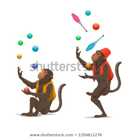 Monkey juggling Stock photo © zsooofija