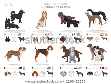 Hunting Dog Pointer Isolated Cartoon Animal Vector Stock photo © robuart
