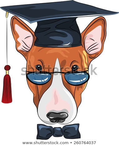 Cartoon illustrazione cane diploma felice Foto d'archivio © bennerdesign