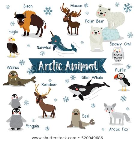 Polar branco tenha ártico animal Foto stock © robuart