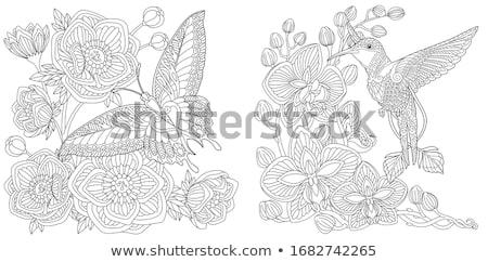 Monocromático beija-flor preto isolado branco natureza Foto stock © blackmoon979