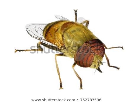 Hoofd wesp witte extreme bee Stockfoto © gewoldi
