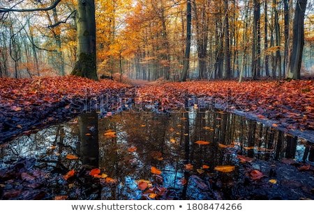 Autumn river stock photo © CaptureLight