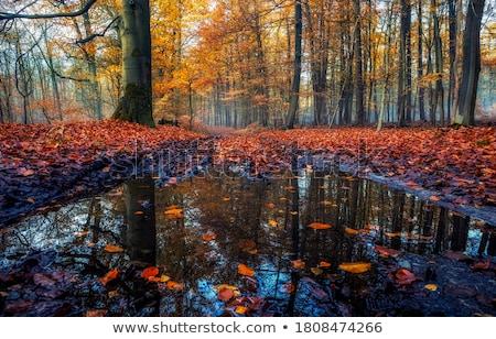 ősz folyó szimmetria tükröződés víz fa Stock fotó © CaptureLight