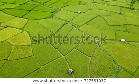 Aerial View of Rural Thailand Stock photo © rognar