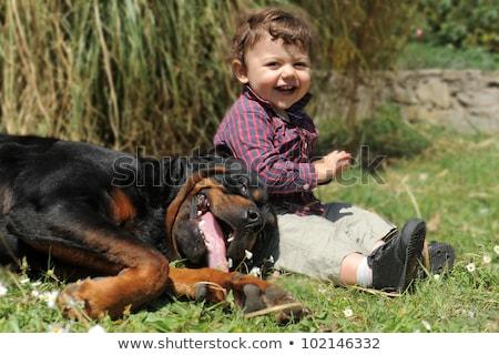 rottweiler · gyermek · portré · fajtiszta · kicsi · fiú - stock fotó © cynoclub