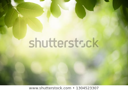 fresh spring leaves Stock photo © prill