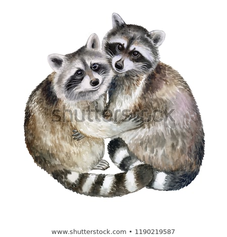 Cartoon Character Raccoon Stock photo © RAStudio