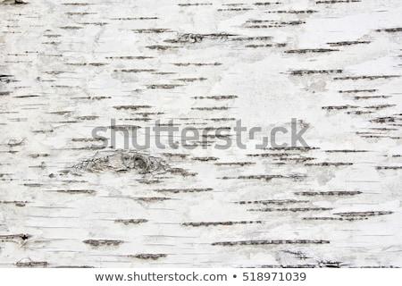 Birke Rinde Ansicht weiß Baum Stock foto © Givaga
