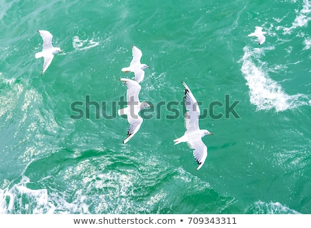 white seagull flying over deep blue waves Stock photo © ryhor