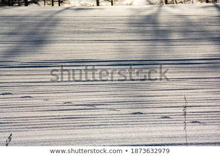 footprint on the snowfield stock photo © ajlber
