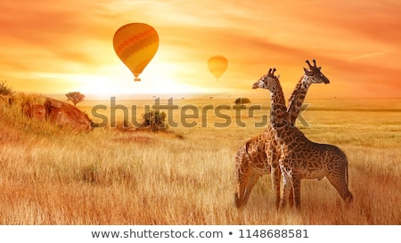 sabana · puesta · de · sol · África · árboles · parque · Sudáfrica - foto stock © ajlber