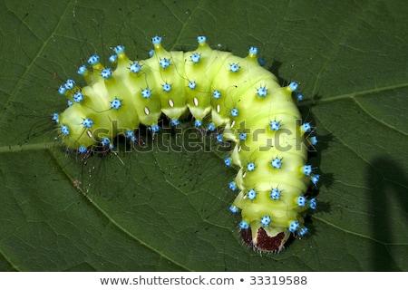 grande · árvore · lagarta · borboleta · natureza · verão - foto stock © smithore