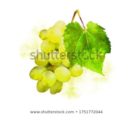 Monte branco uvas vinha fundo Foto stock © Kuzeytac