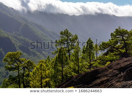 Caldera de Taburiente clouds waterfall Stock photo © lunamarina