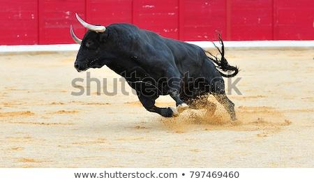 Boğa çalışma vektör karikatür komik inek Stok fotoğraf © pcanzo